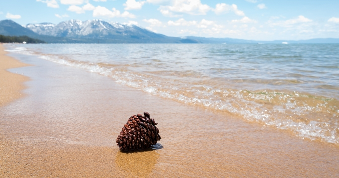 Pine cone on the shore of Lake Tahoe.